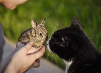 convivenza tra animali