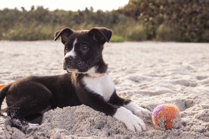 insegnare al cane come comunicare
