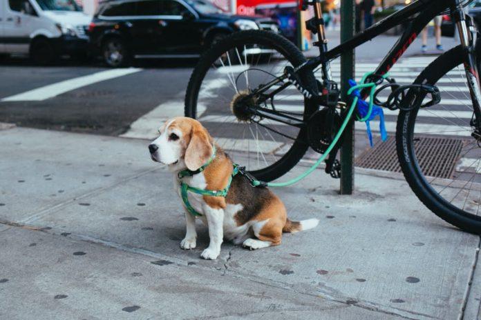 responsabilità di chi detiene un animale