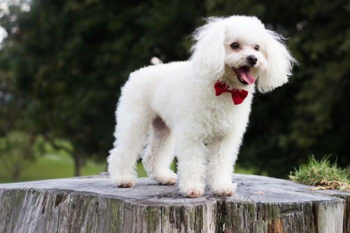 tosatura per cani