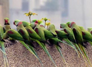 vita di un pappagallo