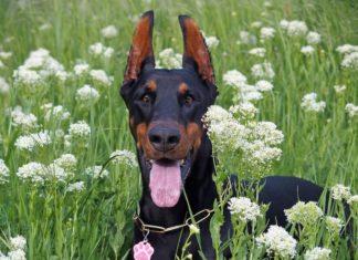 apparato gastrointestinale nel cane