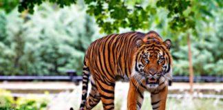 direttiva zoo