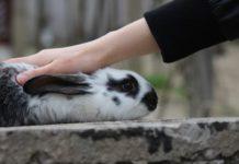 sterilizzare il coniglio
