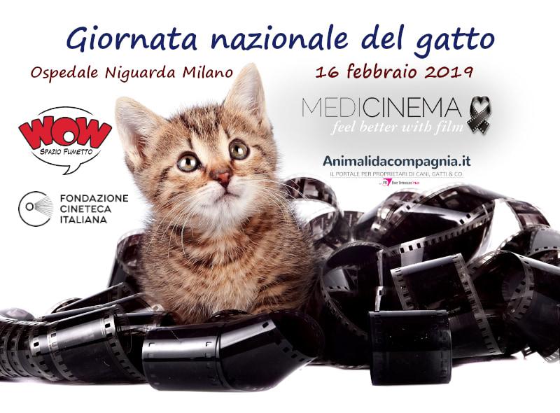 Giornata Nazionale Del Gatto Medicinema Italia Onlus I Gatti Sullo
