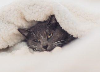 gatto e freddo
