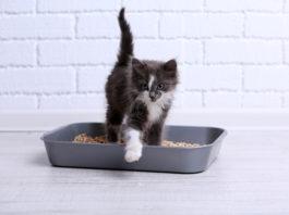 gatto non utilizza la cassetta igienica