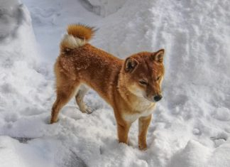 passeggiata in inverno con il cane