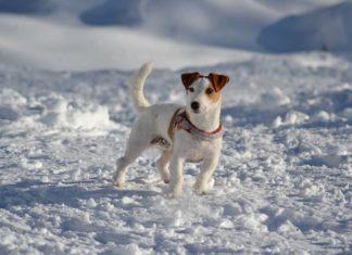 sciare con il cane