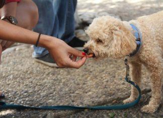 alimentazione e comportamento di cani e gatti