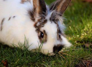 ambiente adatto per il coniglio