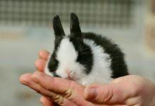 antibiotici da non usare nel coniglio