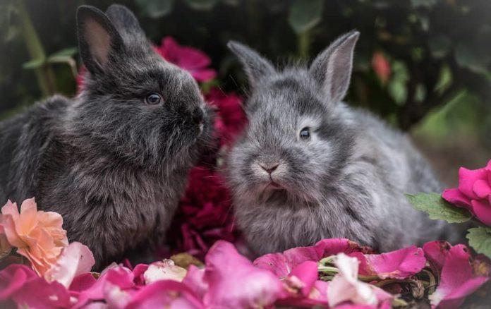 antiparassitari per coniglio