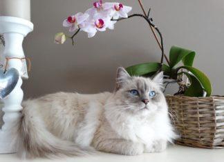 la piometra nel gatto
