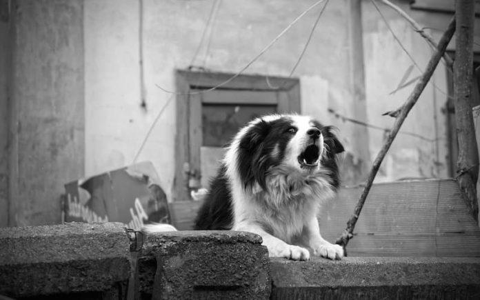 aggressività nel cane