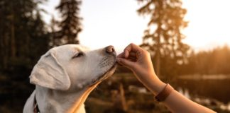 mutua veterinaria