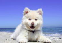 cucciolo in vacanza