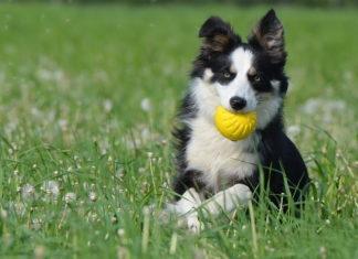 come mantenere in forma il proprio cane