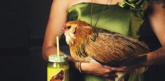cosa mangia una gallina