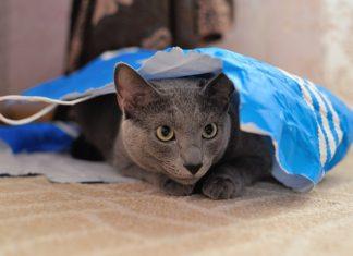esigenze del gatto