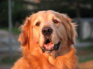 patologie prostatiche del cane