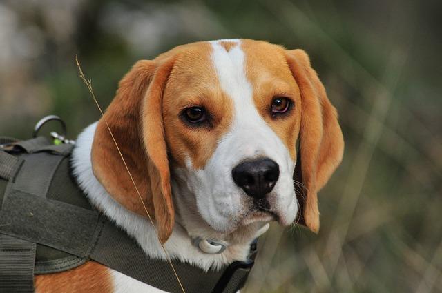 come diagnosticare un cane con prostatite