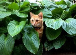 aggressività nel gatto