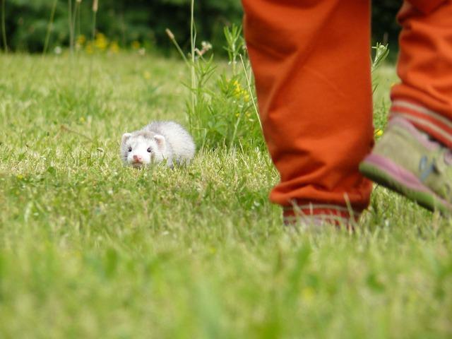 coniglio e furetto in vacanza