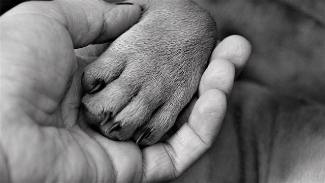 legame uomo cane