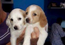 Cuccioli tenerissimi da amare e coccolare