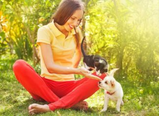 alimentazione degli animali domestici