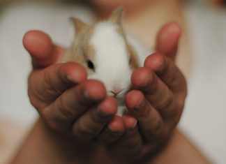 emozioni del coniglio