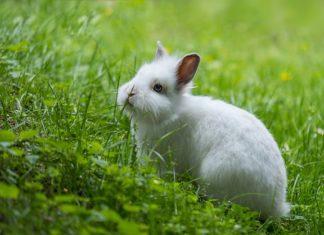 alimenti vietati nella dieta del coniglio