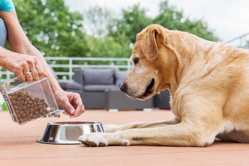 comportamento alimentare del cane