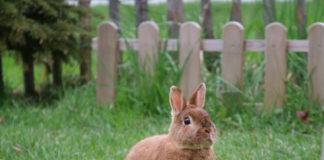 fibra nell'alimentazione del coniglio