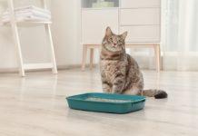 gatto non utilizza la cassettina igienica