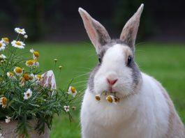 granulati per conigli