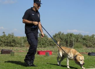 sniffer dogs per la ricerca di esplosivi