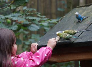 somministrare i farmaci agli uccelli