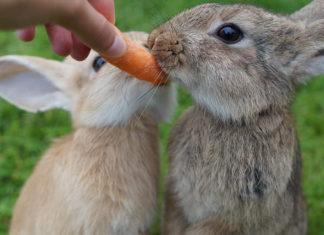 verdure per il coniglio