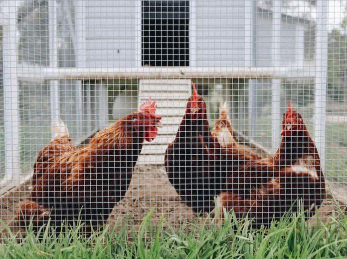centro per il benessere di avicoli e conigli