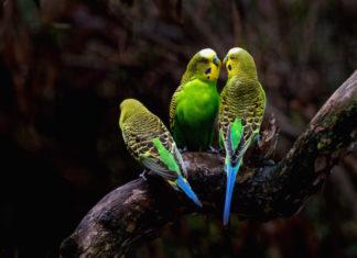 gli esami più utilizzati nella visita clinica degli uccelli