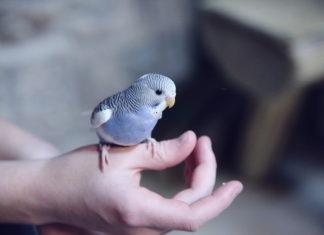 integratori di sali minerali per gli uccelli