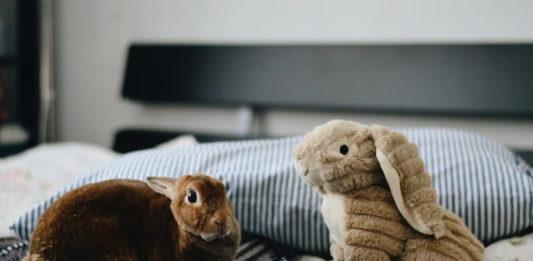 malocclusione dentale nel coniglio