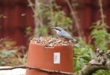 miscela di semi per gli uccelli