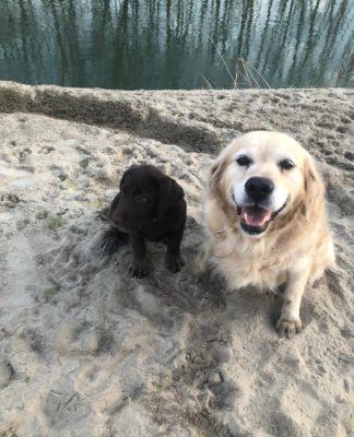due cani