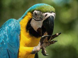 becco degli uccelli
