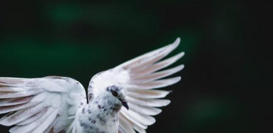 colombi decorativi
