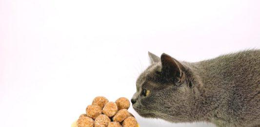come stimolare il gatto nella ricerca dell'alimento