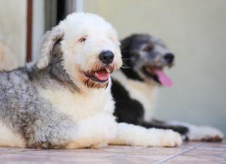 gestione di due cani in casa